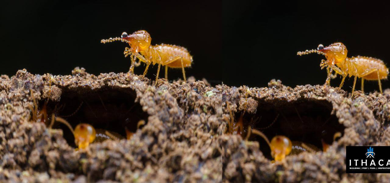 https://ithacabuildinginspections.com.au/wp-content/uploads/2020/02/Are-annual-termite-inspections-really-necessary.jpg